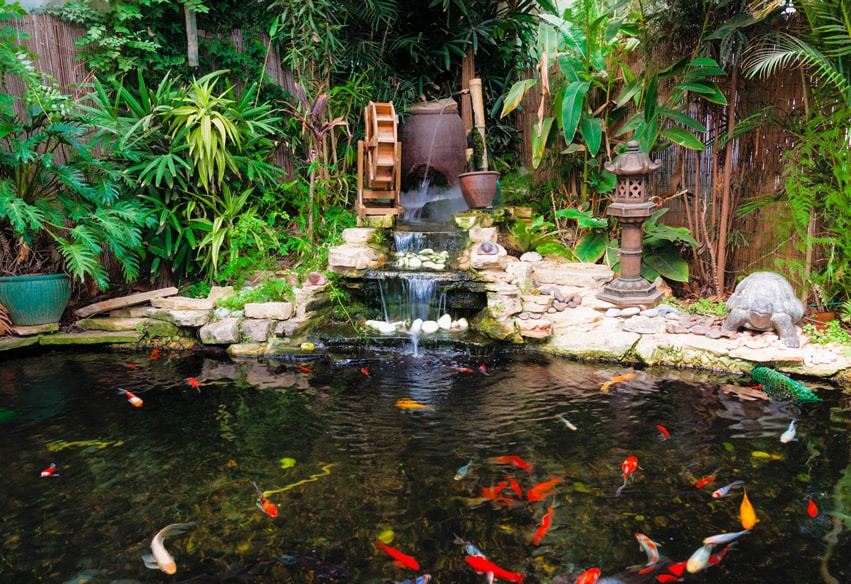 Asian garden with decorative koi pond