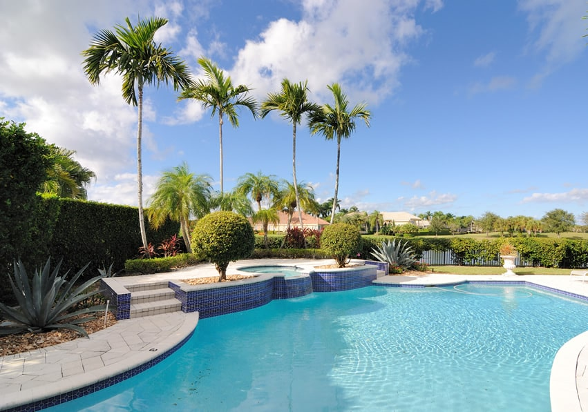 Backyard pool and spa with palm trees