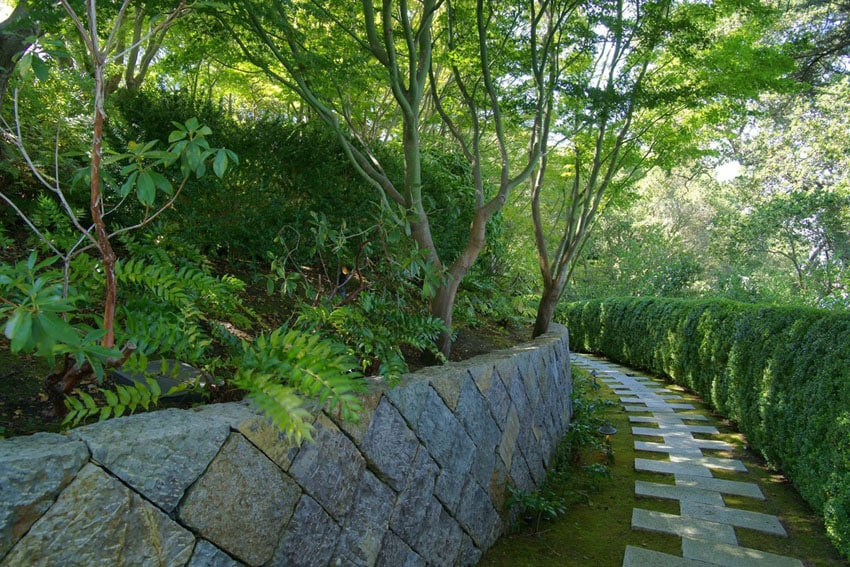 Modular concrete pavers walkway next to garden hedge