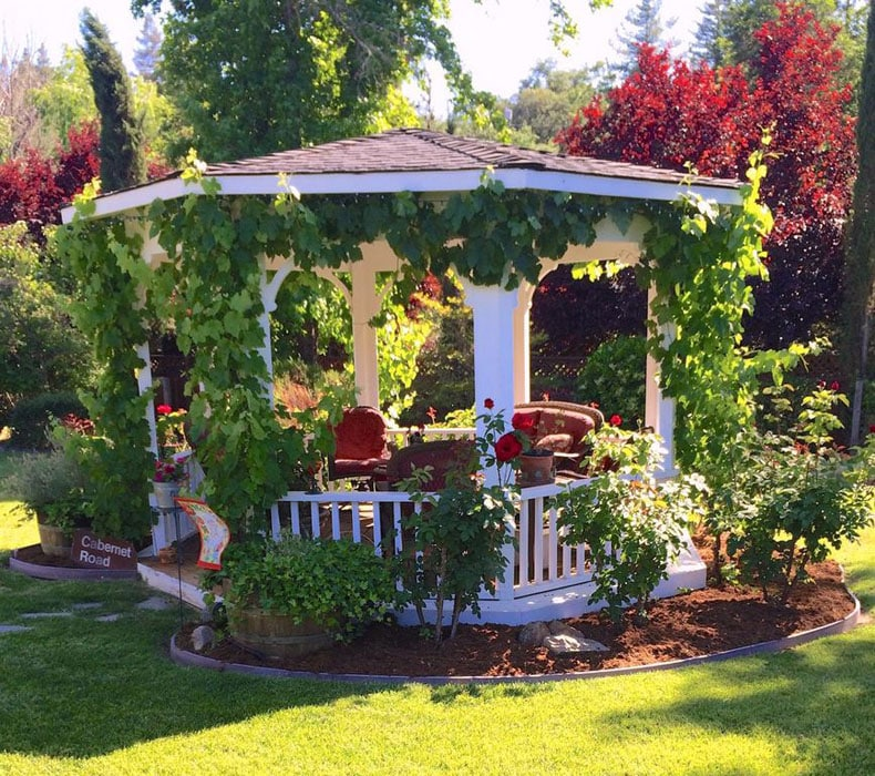 Garden gazebo built with pine and 10 foot in diameter with creeping vines