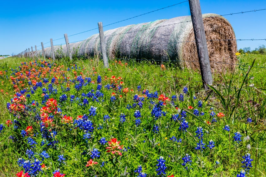 Barbed wire farm fence with wild flowers