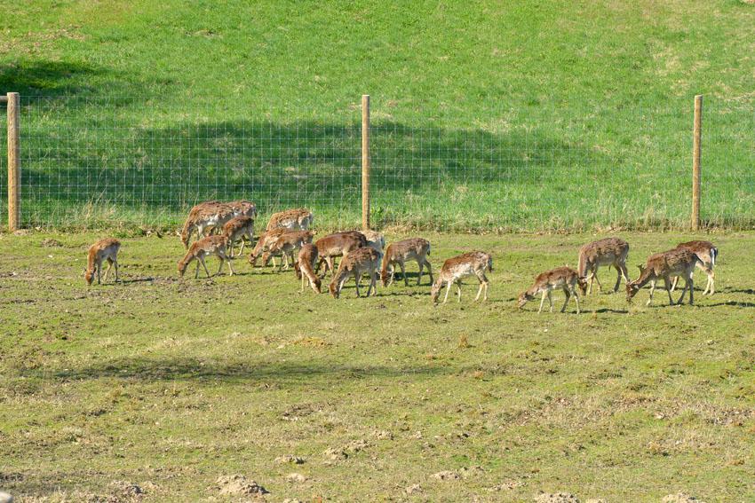 Deer fence around property