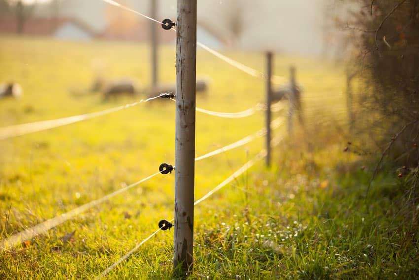 Electric fence around animal pasture