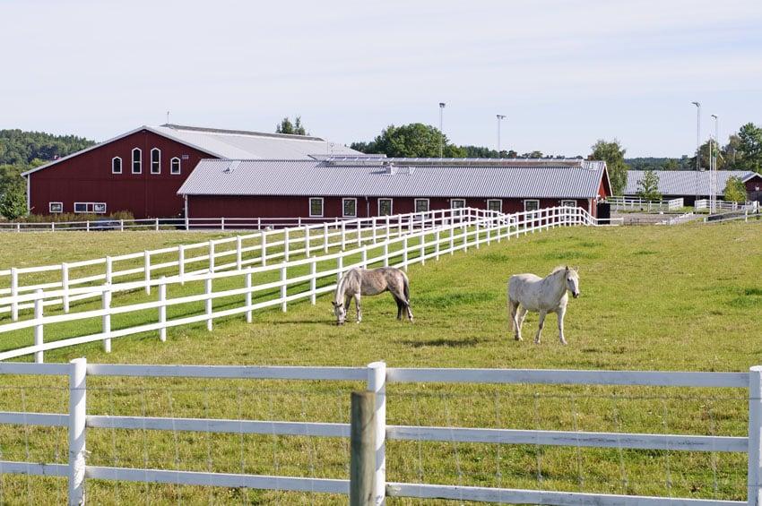 Horse fencing on farm