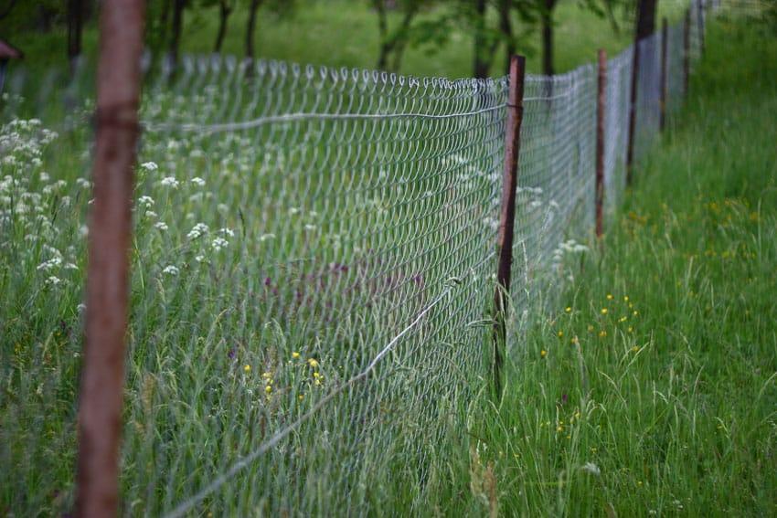 Metal chain link fence through grassy yard