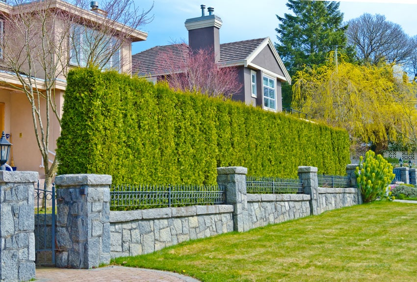 Metal privacy fence with large hedge