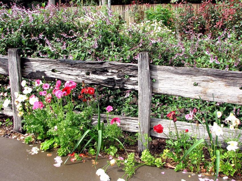 Reclaimed wood fence in garden