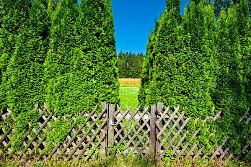 Rustic lattice fence