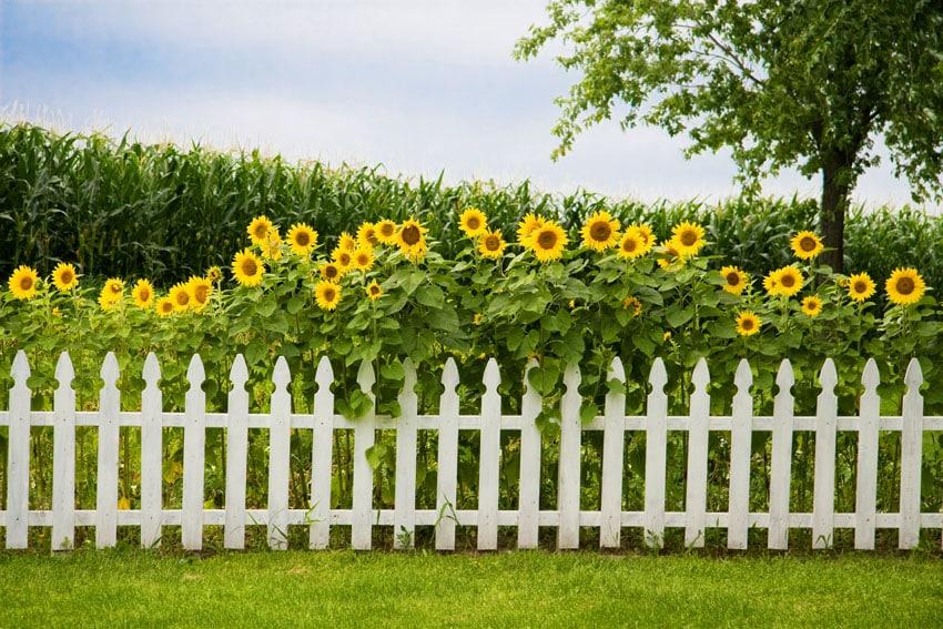 Small white picket fence in flower garden