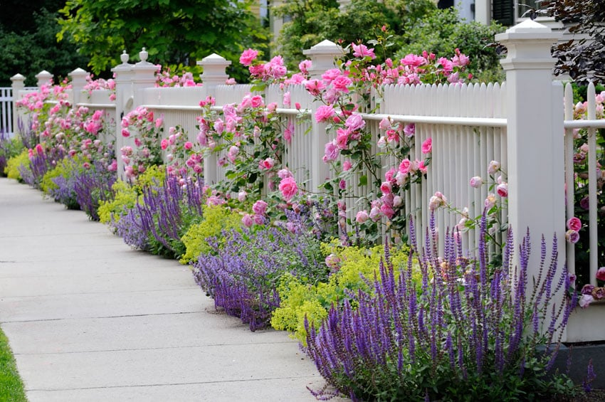 White garden fence with climbing flowers
