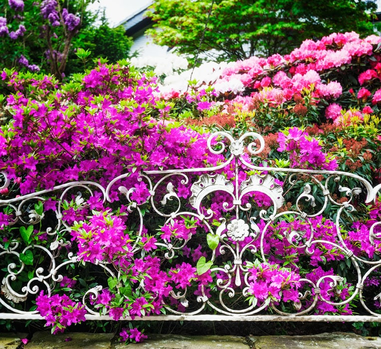 Wrought iron garden fence with flowers